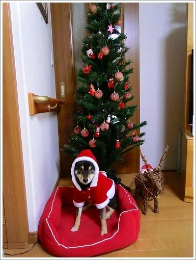 12.12.24 クリスマス 001