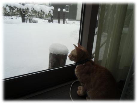 雪見ちろる