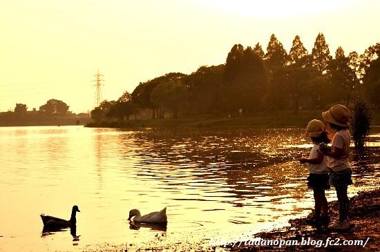 Nikon_20130521_180129.jpg