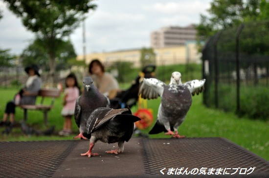 Nikon_20130622_151402.jpg