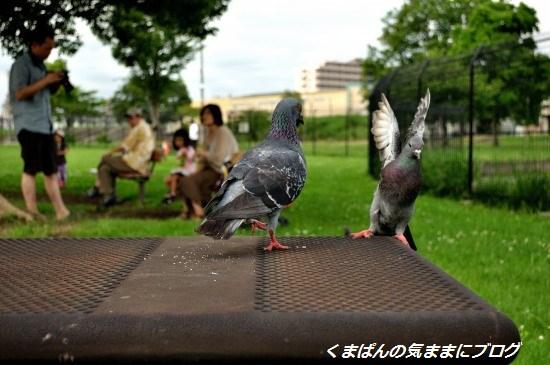 Nikon_20130622_151542.jpg