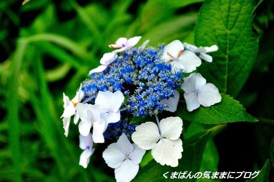 Nikon_20130622_164611.jpg