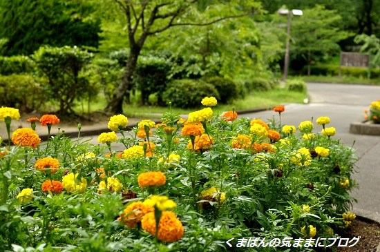 Nikon_20130630_142024.jpg