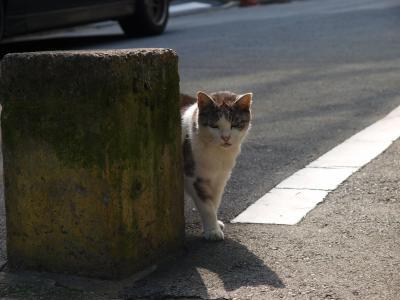 新宿猫_convert_20120506103621