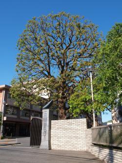 川越高校_convert_20120513134318