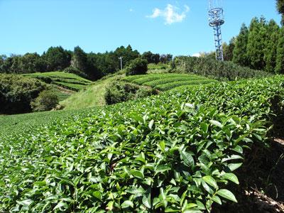 011少林寺茶畑