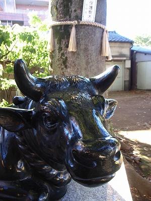 北野神社牛