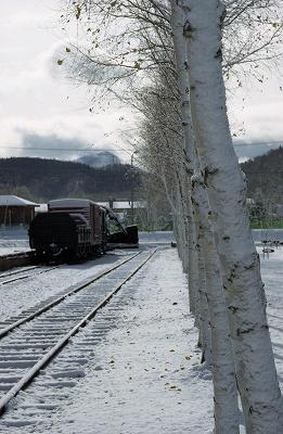 白樺と列車