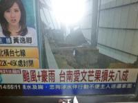 台風+豪雨で台南愛文マンゴー損失8割