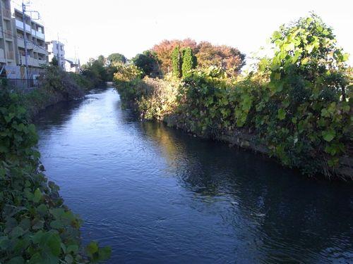 見沼代用水8