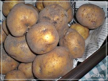 20120621野菜1