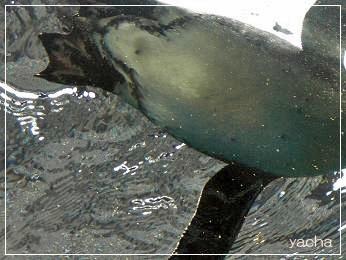 20120813京都水族館3