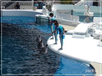 20120813京都水族館6
