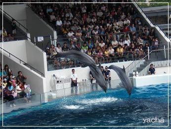 20120813京都水族館7