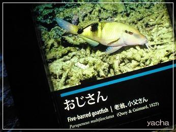 20120813京都水族館8
