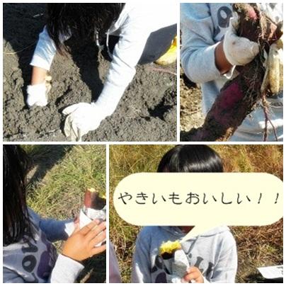 20121027いもほりページ