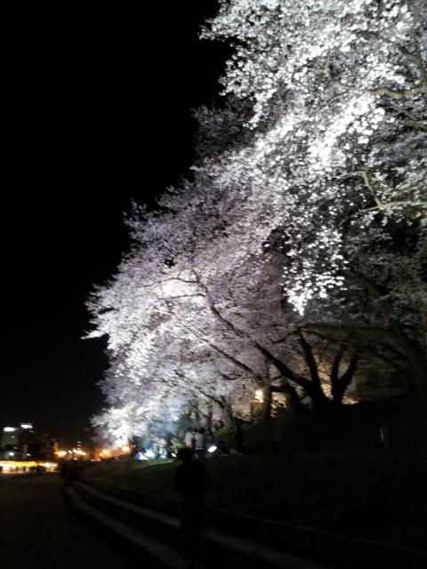 紺8と銀Gと白猫の日々-夜桜2