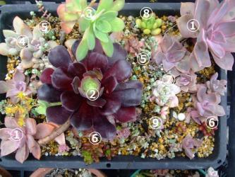 多肉植物ポイポイポ~イ葉挿し・挿し木バッド~♪色々な種類が根ついてきたようです♪2013.04.25