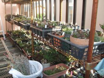 ハオルチア・ガステリアなど~花芽を切り取りました~スッキリさっぱり~♪株分けもしたいです♪2013.05.23