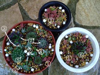 センペルビウム 栄、セダム 白雪ミセバヤ・玉蛋白、クラッスラ エルネスティなどいろいろ寄せ植えしてみました~茂るのが楽しみです♪2013.03.04