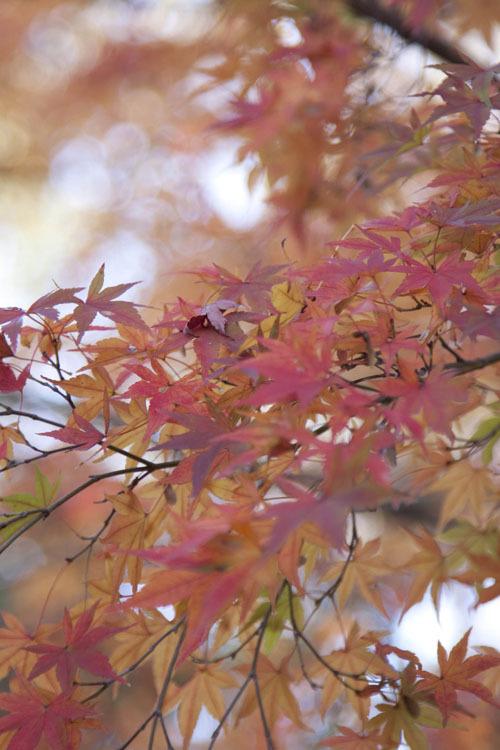 Tamanosuke -autumn1