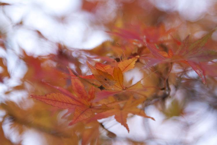 Tamanosuke -autumn2