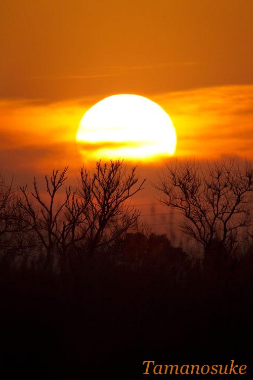 Tamanosuke -sunset