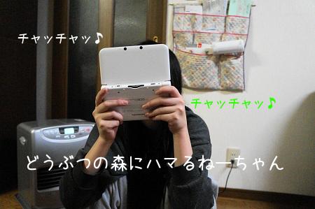 DSC03118 (1)