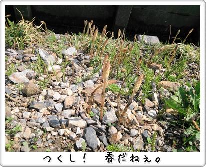 DSC_0308 (1)