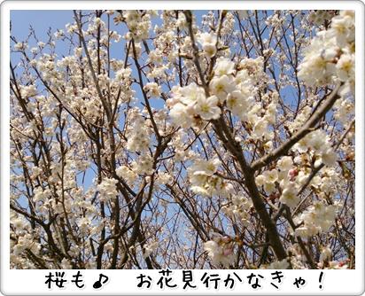 DSC_0310 (1)