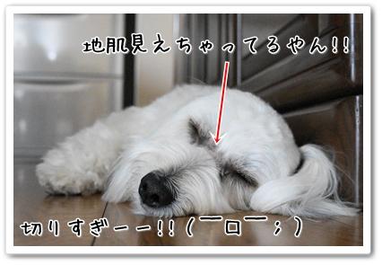 DSC03893 (1)