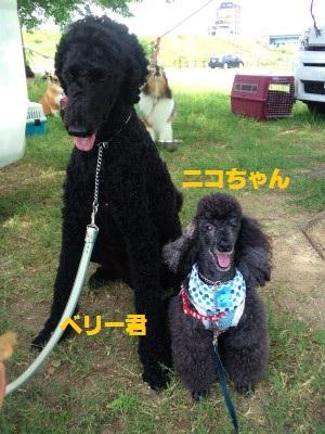 ニコちゃん&ベリー君