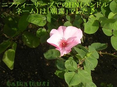 20120429rose2a