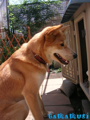 20120505rose1dog