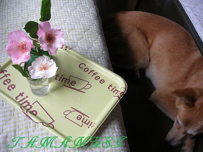 20120509rosedog