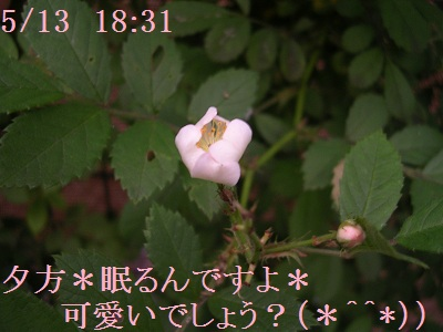 201205wildrose3