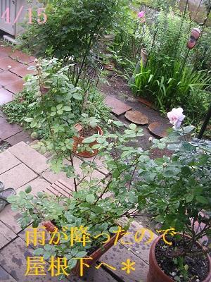 DSCN6114a.jpg