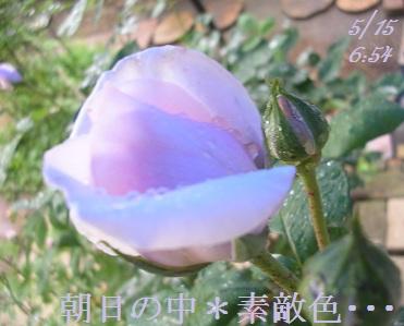 DSCN6121a.jpg