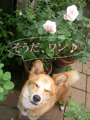 20120517rosedog