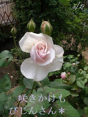 DSCN6652a_20120608172157.jpg