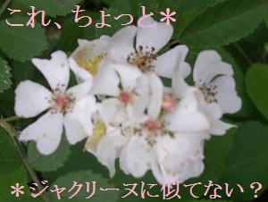 201205wildrose15