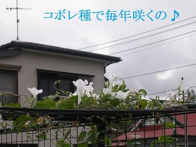 DSCN7456a.jpg