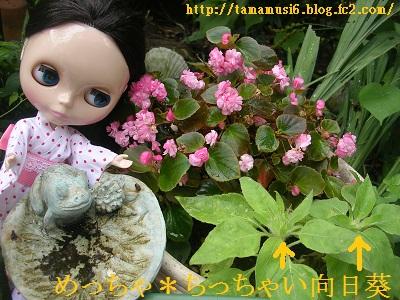 DSCN7466a.jpg