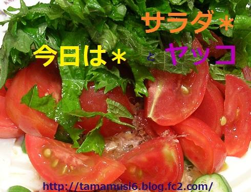 DSCN7885ab.jpg