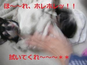 DSCN8032a_20121003210449.jpg