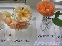 20120526og14