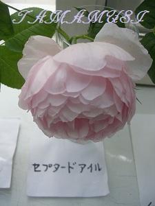 20120526og19