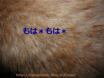 DSCN8079a_20121007214747.jpg