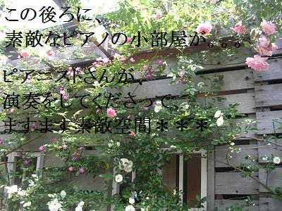 DSCN8085a.jpg