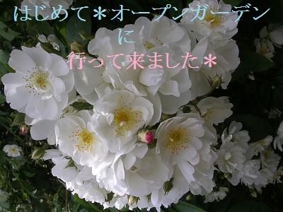 20120526og4